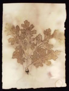 eco-print oak