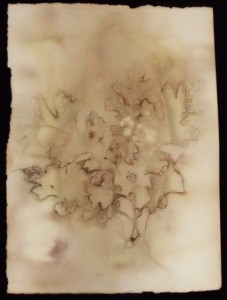eco-print oak2